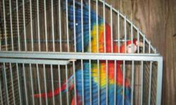 I have a proven pair of Macaw (Green Wing Macaw Female/Scarlet Male), they both are proven and DNAed. Big sized birds, Perfect health and feathers. Male was tame but not anymore now, but still he talks, female is completely wild. Golden opportunity for
