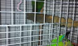 I have a breeding senegal pair This ad was posted with the Kijiji Classifieds app.