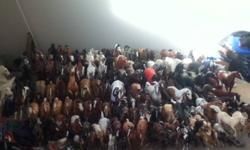 I have about 140 Breyer Collectible Horses that i am selling. Sizes frim tradition, classics and stablemates. All traditionals are in fairly well condition. Offered for sale is Barbaro, Bog Chex To Cash, DZ Weedo, Smart Chic Olena, Mon Gamin, and many