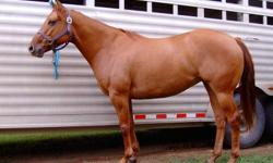 Kruger is a pretty red dun 2005 AQHA mare.  Race/barrel bred - by Passngoeffortlessly by Proudest Effor by Special Effort and out of a Whizz Blitz mare.   Was rode when I purchased her 3 years ago, but for the last 2 years has been a broodmare.  She came