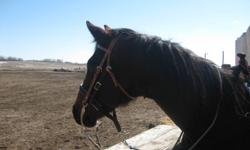 I am trying to save my money for a horse, this is the ONLY reason why i am selling these items. There is nothing wrong with them :) The tie-down, i'd like to sell for 15$, i got it for 30$ and i used it approx. 5 times. The nose band, i'd like to sell for