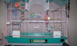 I have 3 budgie bird for sale. One female by herself for $15.00 . A pair with a cage and nest for $60.00. I have to get rid of them because I am moving to another province.