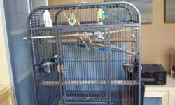 Two Budgies with large cage and smaller portable cage