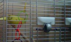 i am moving and i have a budgies bird but cant moved with it selling for $80 comes with a cage