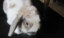 Cuddly bunny for for free, comes with cage, water/food dish. About a year old, male, very friendly with kids.  Needs a new home because he isn't getting the attention he needs and deserves. Located in Kincardine.