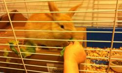 About 4 months old, blonde in color. Very friendly. I thought this would make a good first pet for my son but I just don't have the time to give the bunny the attention and exercise he or she(not quite sure) needs. Has never bitten anybody even with the