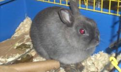 The Alliston & District Humane Society is currently home to many many many bunny's who are all looking for a loving forever home, All of these bunny's are extremely friendly and love people with unique personalities. We have Adult lop's male and females,