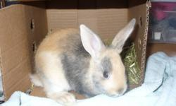 Looking for a good home for my rabbit. She's healthy, very sweet and loves to cuddle. She's a 2 and a half year old dwarf bunny, so still fairly small and absolutley adorable! Approximately half of a 10kg bag of food included. $20 obo Please phone: