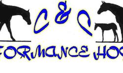 AQHA Professional Horsemen & Level 1 Coach   Board*Training*Lessons*Leasing*Camps*Show Coaching *Sales*Breeding*Judging*Clinics*Therapeutic Riding   902-485-8659(H)    902-921-8183(C)www.ccperformancehorses.weebly.com   All breeds, ages and levels
