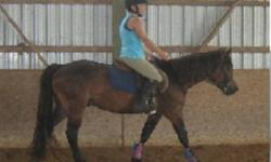 Cash is green broke walk, trot, canter. Has not been started over fences yet. Lease includes 5-6 rides per week. Would consider a free lease to the right home. Free english lessons are available with this lease. With a winter of work, Cash will be ready