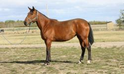 Dawn , 6 yr. old, 16.3 hands high registered Canadian Warmblood.  You won't find a better breeding as this mare is out of Wodan and Isle de Notre Dame.  Excellent movement with great jumping ability.  This mare is able to compete in dressage, jumping and