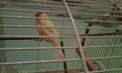 I have a female Canary. Likes to sing and she's in good health.   Only $50 with cage and accessories.   Call/Text 613 363 5068 anytime