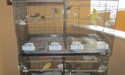 Hi I have for sale a canary/finch breeding set up includes the following 5 malefemale pairs:(10 birds in all) 1 pair red fife canaries, 1 pair gloster corona canaries, 1 pair beautiful gouldian finches, 1 pair fancy yellow canaries and 1 pair zebra