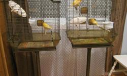 A family of three canaries is in need of a loving home. Birds come with the cages, along with some supplies.   Birds: One female age 6, a male age 6, and their male chick, now age 11/2.  Both the adult male and young male can sing (often compete).