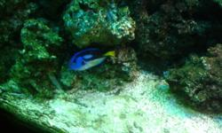 Hi, Due to personal reasons, we need to get rid of our marine fish aquarium tank First we will be selling all the fish in the tank Green moray eel - around 40-50 cm -Very active, comes out when owner is standing infront [look at the picture] - $110 or