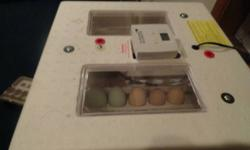 I will be incubating 14 eggs that I got from my chickens. ISA brown rooster. If any one would like the chicks after I incubate them. I do not want to raise chicks during the winter. They will be $2 a chick unsexed once hatched.
