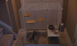 Hi all, I am selling my male grey chinchilla. He is cute, but a little shy. After some handling he will be much better I'm sure. My understanding is that he is around 2-3 years old. Never had any health issues with him. He comes with his cage (as seen in