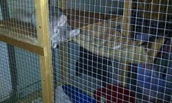 Selling my Chinchillas! (to a good home!) 50$ a piece 2 Females and a Male (Male is 1.5 yrs, Smaller female is 2.5 years and large female is 3.5 yrs old) All 3 + bag of food+ water bottle+ running wheel+ dust bath (dust house and spare dust) for 175$ (add