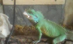 HEALTHY ,not from the pet store.full stomach eating daily. friendly.pictures of parents.1st male 2nd female