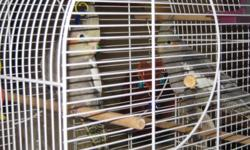 I have 6 hand tamed baby cockatiels males and females .I can identify some of the birds few are still to young but will be able to tell soon. 250-347-6712