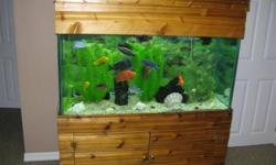 90  gallon 1/2 inch thick Glass Fish Tank with Beautiful African Cichlid for sale Includes custom tank base and canopy, New Fluval 305 Filter worth $200, gravel, shells, plants side Aqua Clear 70 pump. Canopy icludes 2- 48 inch Flourecent Lamps. African