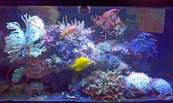 I am changing things up in my tank - just sick of the way it is and trying something new.  I've got 50-70 lb of live rock (I can't really remember to be honest) absolutely covered in encrusting corals, etc that will be going with the rock.  Just to be