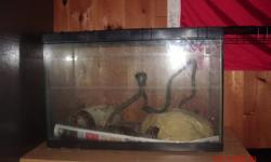 ehj I have one motley corn snake for sale, comes with small tank, and a bigger tank where you can find or make a lid for. also some small frosen mice.  Currently the snake is living in the small tank sice that one has a good lid, the heatpad is attached