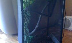 friendly cuban anole for sale. cage, fake leaves, sticks, light and wood gravel. able to drop off if its in scarborough/east york area.  email if interested