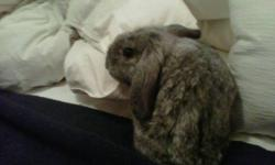 I am trying to find my 9 month old lop earred bunny a good home. I am moving unexpectedly and can not take him with me. He is a good natured, friendly rabbit. Litter trained for the most part, but still has some minor accidents. All supplies are