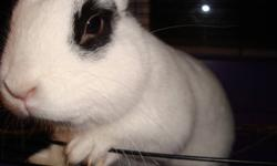 4 month old rabbit. Lovely and cute looking for good home.