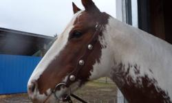 """Dark brown  double stitched ear bridle with 5 1/4"""" jointed snaffle bit and reins."""