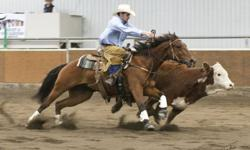 """Cowhorse - Reining - Cutting - Colt Starting - Clinics - Lessons - Sales   Some recent accomplishments:   2011 Canadian Supreme Horse Sale - High selling 2 year old (""""Me And Lena"""")   2011 Silver Slate Reining Classic ? 2nd in the Open Reining 2011"""