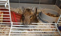 Two very cute Degus are looking for a great new home! They are hand raised and really friendly.I would like them to go to a home together as they are social animals and enjoy company. Its $30 for the two degus and their cage and wheel.