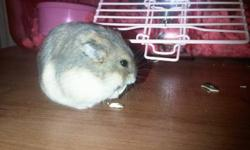 I am too busy to take care of my hamster now so I'm selling her. Everything you need is included, just add love and care. Included: Dwarf hamster- approx 5-6 months old, female, named Daisy (you can rename her), friendly and playful does not bite Cage-