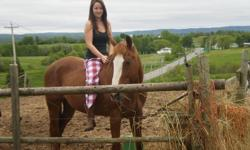 Experienced Stable Hand Looking For Work ASAP! I am looking to work in a barn between Windsor, NS and Sackville, NS as I travel between those area's daily. I have 16 years experience working with horses of all types. I would like to start asap and will