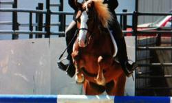 Purebred Registered Section B Welsh Pony. Flashy 12.2hh Chestnut mare with flaxen mane & tail. Aurora is a beautiful 9 year old pony with show ring experience. Many winnings include Hunter Jumper Champions; 1st place equitation & jumping division at 2011