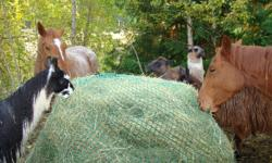 Promote horse health by providing continuous hay (mimics natural grazing) without increasing actual consumption. Ease digestive concerns, breathing illnesses, stall vices, and fence chewing while maintaining a healthy insulin level. Fat horses tend to