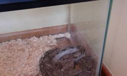 Female 4ft columbian boa.   Eats live rats weekly.   Includes full inclosure.   Contact if interested.