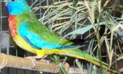 we  have a 2  yr old  pair  of red rumpparakees  for sale  and  we arakng  150 for the pair  and we have a paira java rice  finches for salefor 70  they want  to  breed  so they need a nest they ar also 2 years  old contact for  further details   fredrick