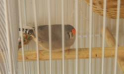 I have nine (9) finches for sale. Beautiful colors. Price for each bird $10.00. If you want the cage with 3 nest and feeders, the price for the nine finches with the cage is $100.00. They are healthy birds, with the possibility to procreate and breed.
