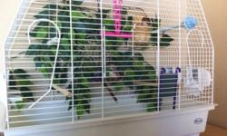 2 baby zebra finches 2 large cages (1 tall 1 wide) Lots of perches 2 nests 1/2 bag of food and bag of treats 1 female and 1 male Both are healthy. Both sing beautifully. This ad was posted with the Kijiji Classifieds app.