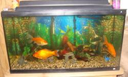 I have a fish tank for sale comes with wood stand. Also comes with rockes, filter, bubble maker, plants and over 25 orderment. back grown. and 2 heater and bukets cleaning hose comes with the fish. 2big gold fish 2tagar barbs 2alge eaters 1 red stripe