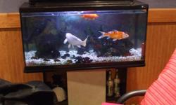 36 gallon tank for sale with stand and 2 12 inch coi fish a 5 inch gold fish and a 4 inch plecto it has rocks and plants and statues it has a filter and light filter and heater never used and all the cleaning supplies and fish food all for 200.00