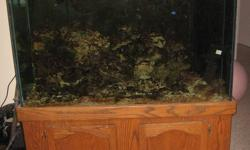 The fish tank is 4ft long, 30 inchs in height, 18 inchs deep, it comes with a beautiful Cinnamon Clown fish, 5 damsels (blue and yellow, black and white and yellow and pink with a black spot) and 1 engineer Goby he is a decent length. There is over 100