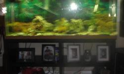 I h 10 -12 convict Cichlids and bottom feeder, they are a range in size, ,,heater,fliter,air pump,gravel,decor, and fish asking $100 obo will consider offers don't be afraid to make one View the video of the tank here