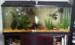55 Gallon Fish Aquarium complete with stand, lights, heater, filter, air pump, thermometer, rocks, stones, plants.  2 Silver Dollars, 2 Bala Sharks, 2 Pleco's, 1 Red Tale Shark.  Chemicals and food also included.