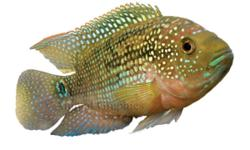 hi i have a jackdamsy fish i need it to go the size is xl and i bot it for $29.99 i am giving it for $15 the big gold fish are gone email me