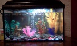 We have about 7 tropical fish and a snail. Its a10 Gal tank. Comes with some fake plants. There is a heater for the fish. With it is almost a full thing of food. Also a thermometer, water conditioner, Bacteria supplement, a biological aquarium