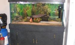 I have a 90 gallon tank with assorted fish and accessories for sale. It comes with 2 filters, a heater, air pump and stone, assorted real rocks and drift wood and other accessories. The tank comes with a stand with lights. I am asking $700 obo please.