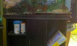 30 gallon Fish Tank with 8 Kissing Fish of various sizes with stand for sale. They originally belonged to my daughter (when there was just two of them) but have been with us for several years. Don't want to keep them anymore but would like to find a good